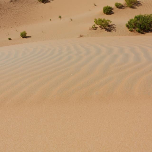 """Early Morning Desert Texture"" stock image"