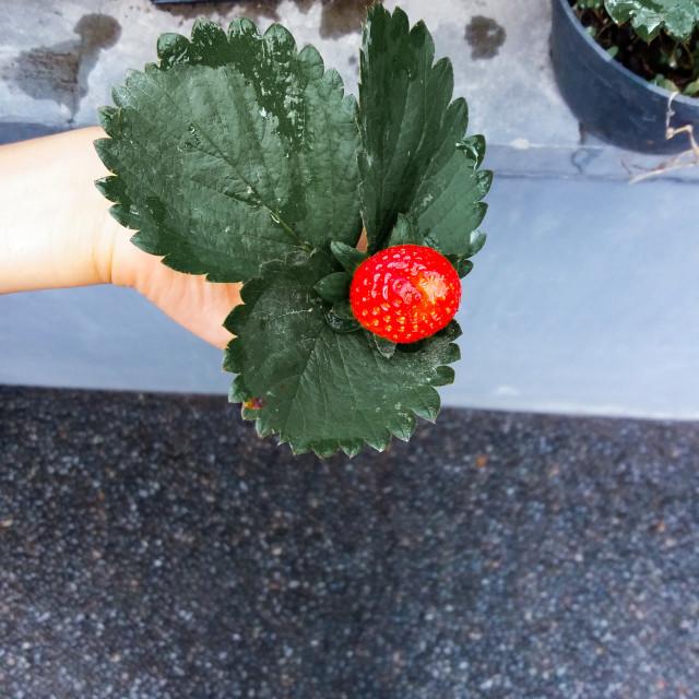 """be like strawberry"" stock image"
