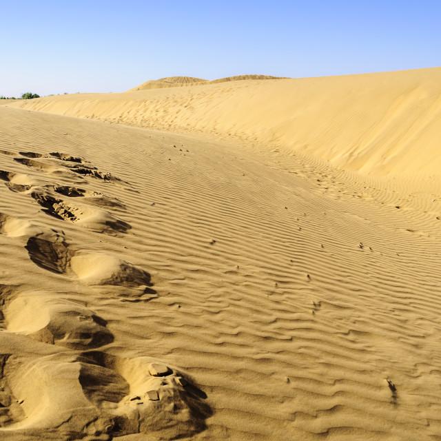 """""""Footprints of camel on Sand dunes, SAM dunes of Thar Desert of I"""" stock image"""