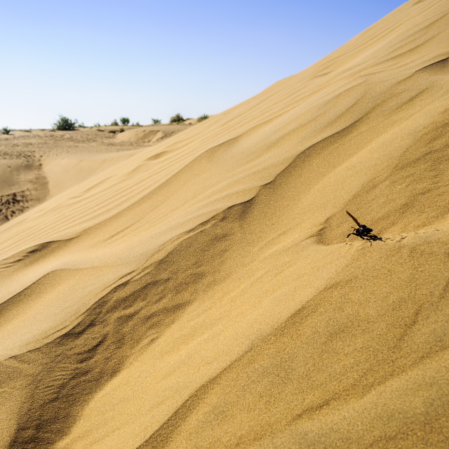 """Sand dunes, SAM dunes of Thar Desert of India with copy space"" stock image"