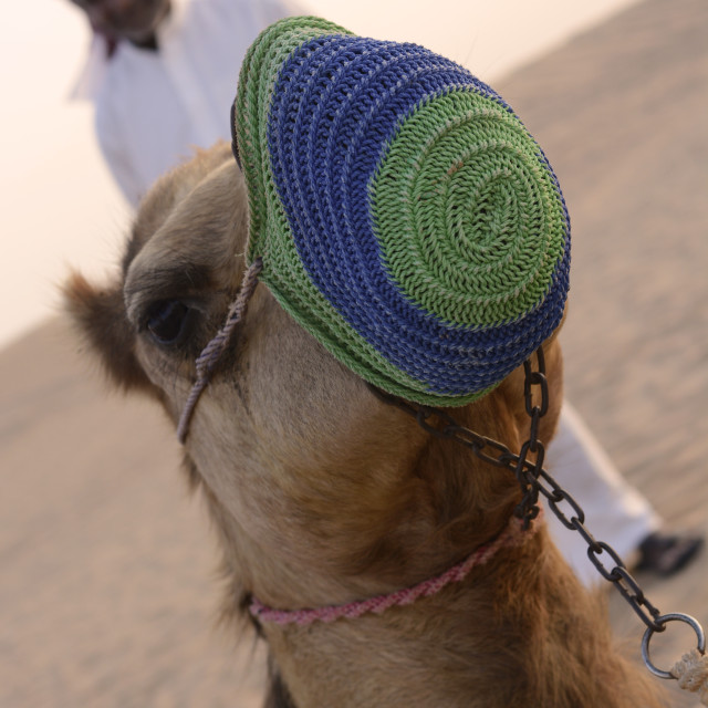 """""""Bedouin with camel"""" stock image"""