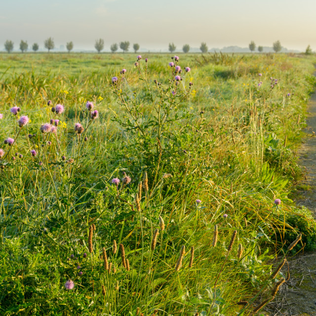 """""""Flowers next to the path"""" stock image"""