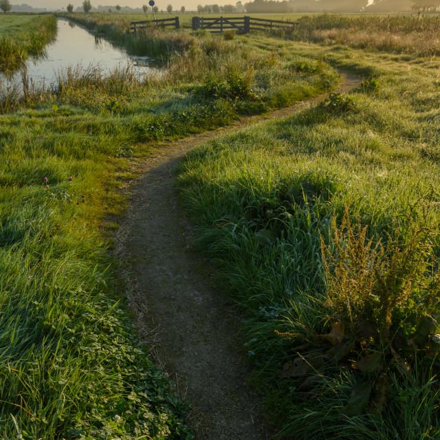 """Path through the meadows"" stock image"