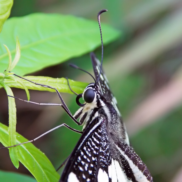 """""""Butterfly resting on a plant"""" stock image"""