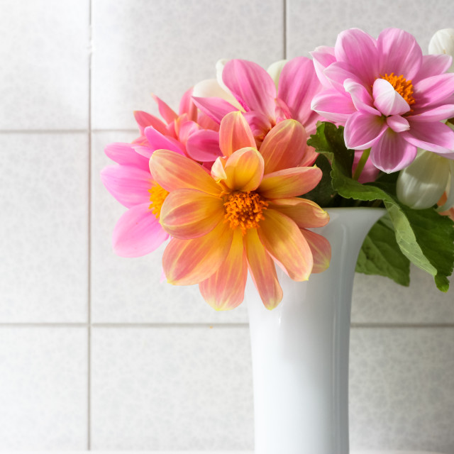 """dahlia flowers"" stock image"