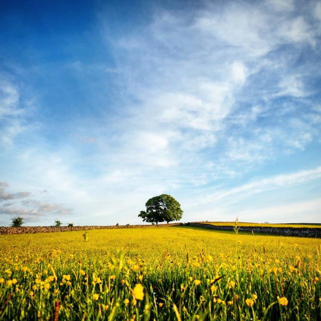 """Field of Summer"" stock image"