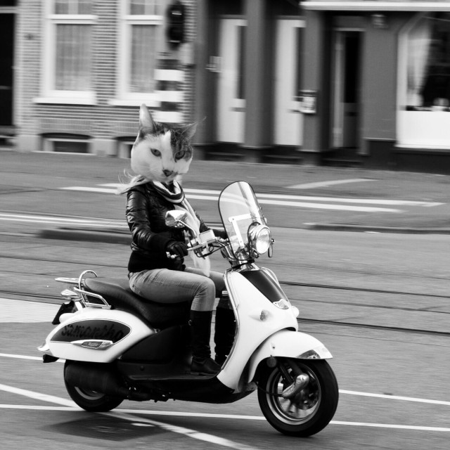 """A cat on a scooter"" stock image"