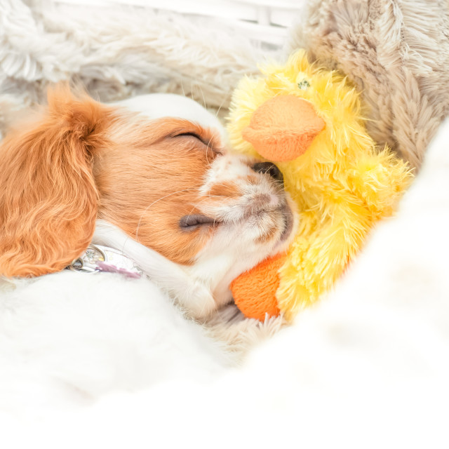"""dog and duck"" stock image"