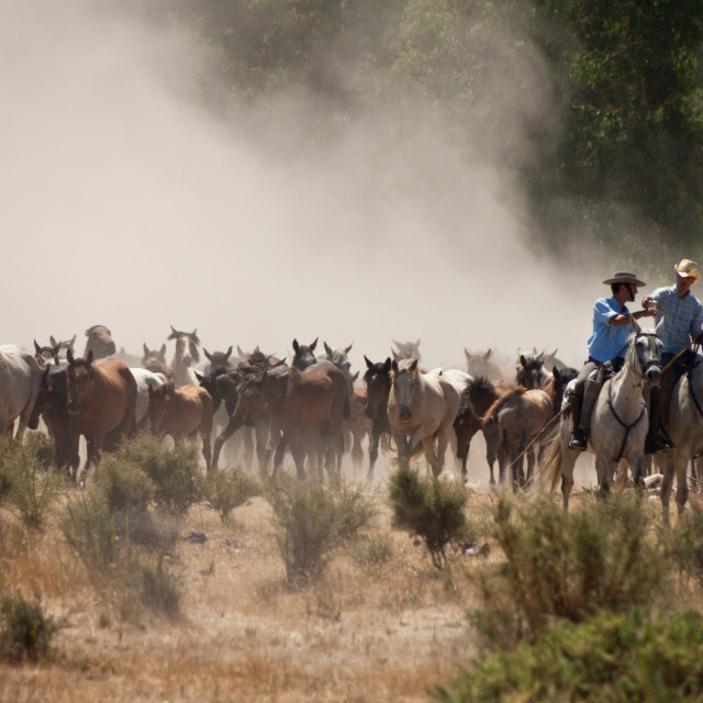 """""""Wild Horses and Ranchers."""" stock image"""