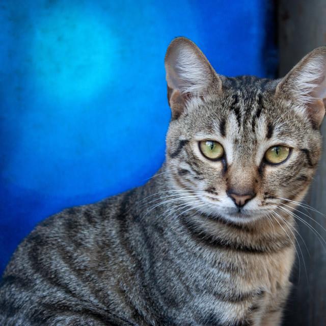 """""""Unirii Cat"""" stock image"""