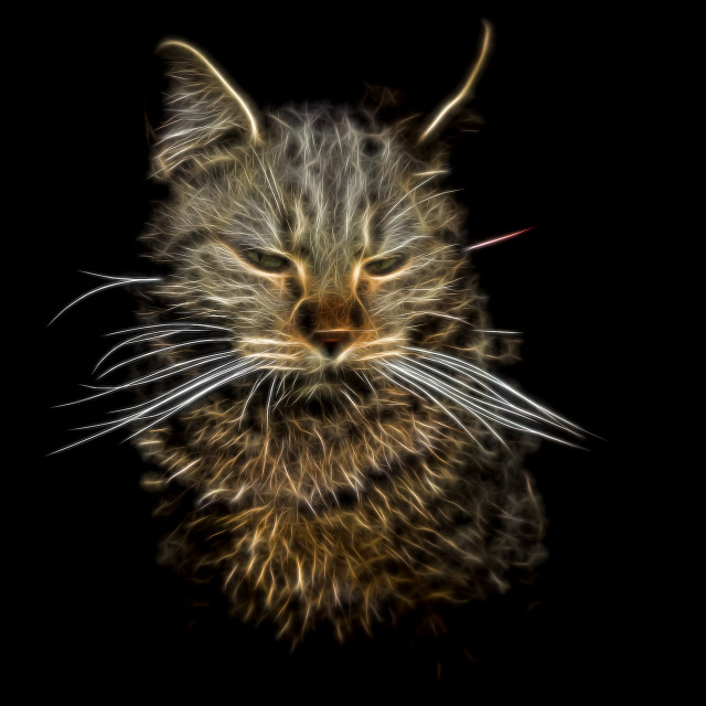"""""""Electric effect Glowing Cat on black backgraund"""" stock image"""