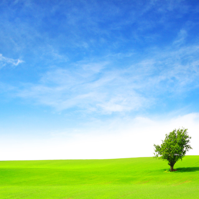 """Lone Tree in a field"" stock image"