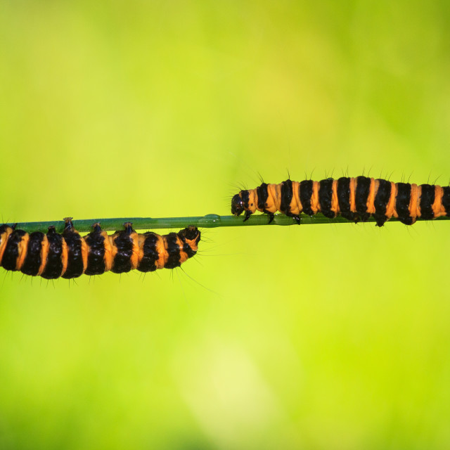"""""""Rush hour on the grass stem"""" stock image"""