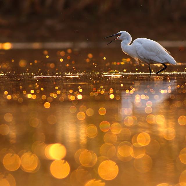 """Hunting in Pond of bokeh"" stock image"