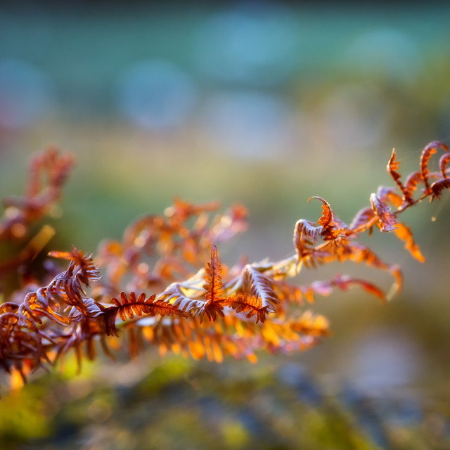 """Fading Ferns"" stock image"