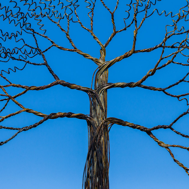 """""""Wire Tree Branches"""" stock image"""