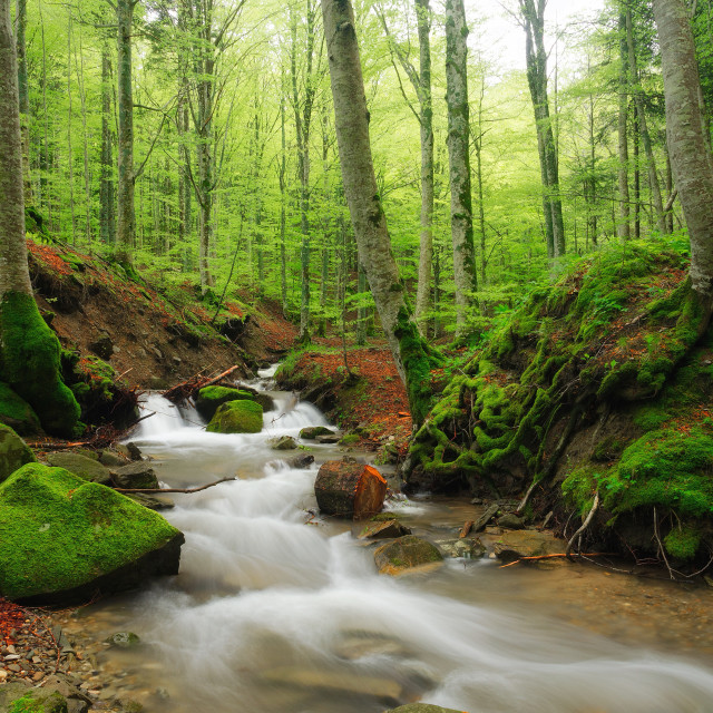 """small stream in the natural park"" stock image"