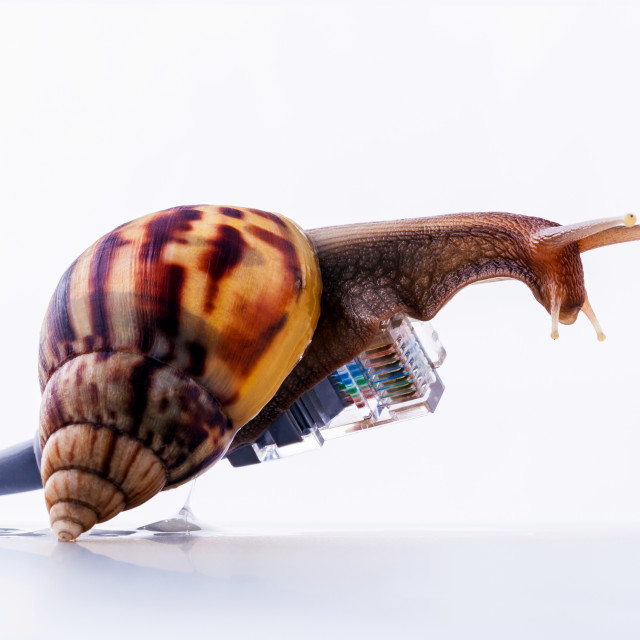 """Snail with rj45 connector symbolic photo for slow internet connection...."" stock image"