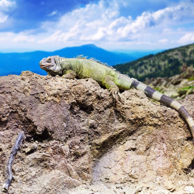 """lizard at mountain landscape"" stock image"