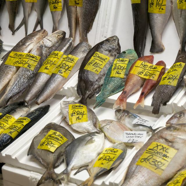 """""""Fresh Fish, Billingsgate Market, London"""" stock image"""