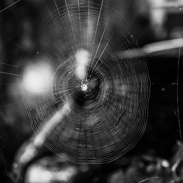 """Black and white spider web."" stock image"