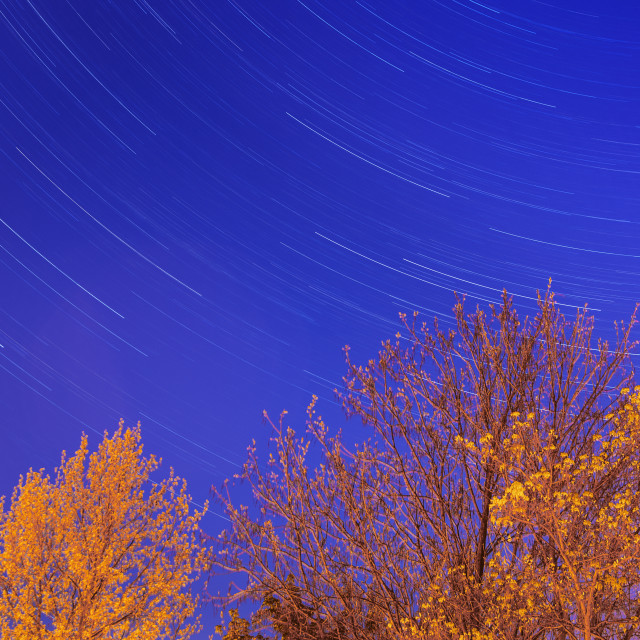 """stars and trees"" stock image"