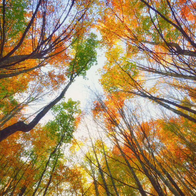 """Forest in autumn"" stock image"