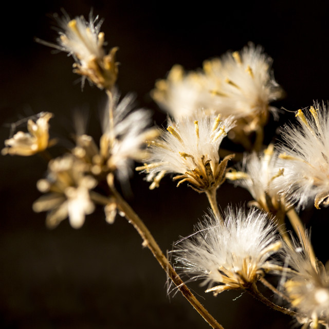 """Autumnal light on plant"" stock image"