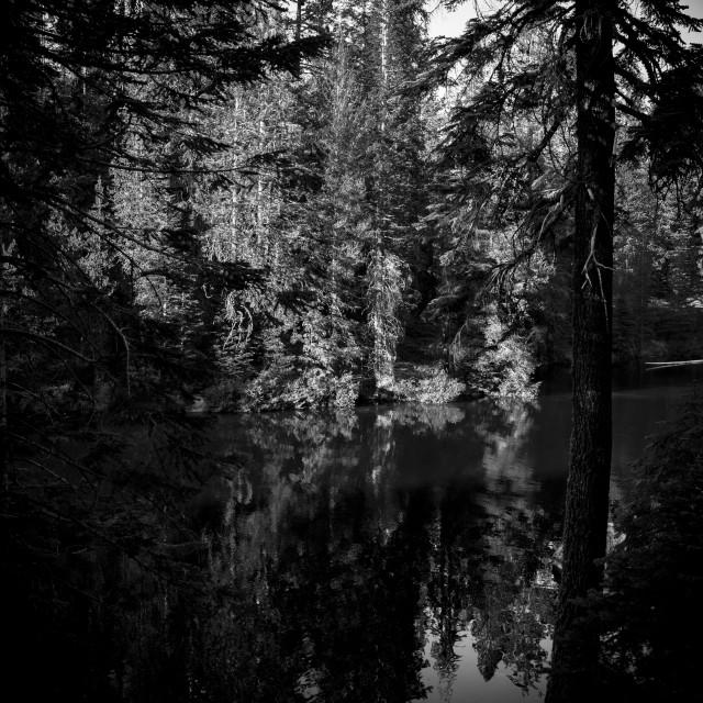 """Pine reflections"" stock image"