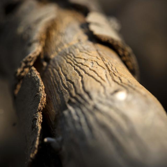 """""""Wood worm art"""" stock image"""