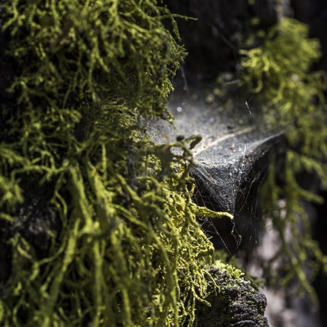 """Cobwebs and Moss"" stock image"