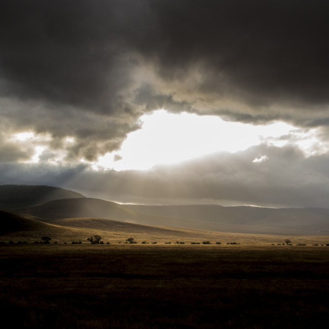 """Morning at the Ngorongoro Crater"" stock image"