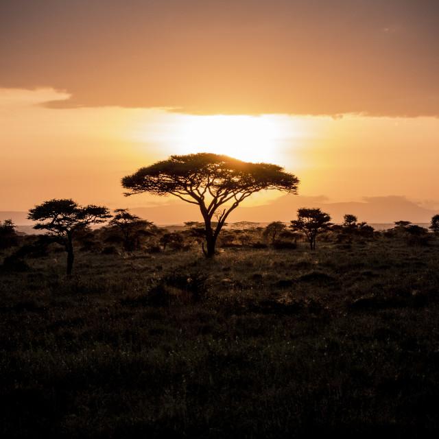 """""""Serengeti sunset"""" stock image"""