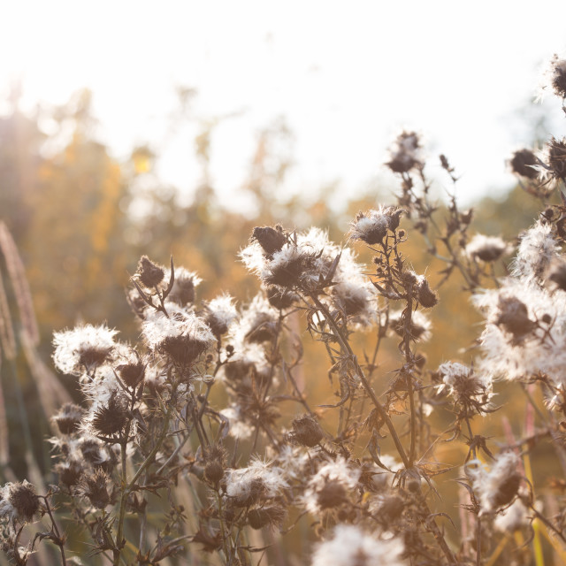 """""""Fluffy autumn meadow plants"""" stock image"""
