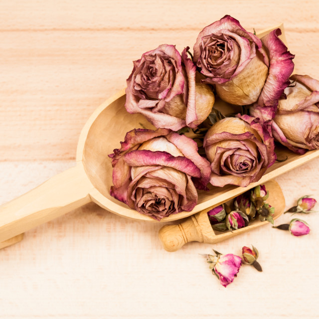 """Dried roses and buds with wooden objects"" stock image"