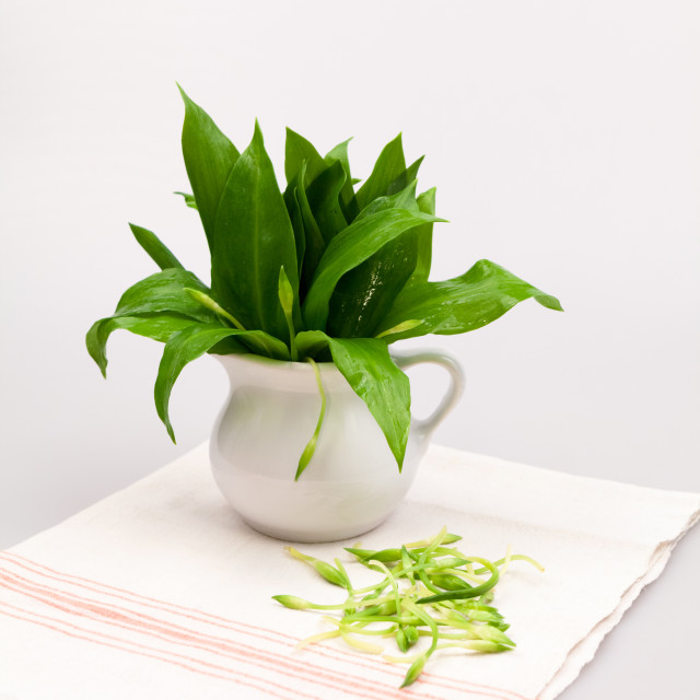 """Still life composition with bear's garlic (Alium Ursinum)"" stock image"