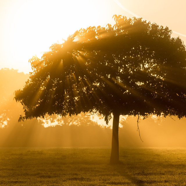 """Sunrise light through parkland tree"" stock image"