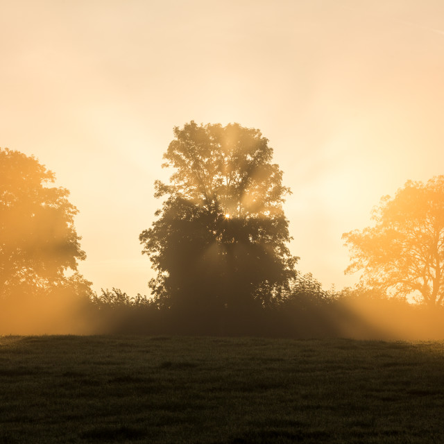 """Sunrise through Hedgerow Trees"" stock image"