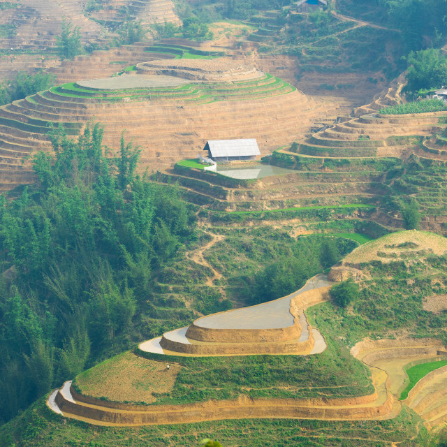 """Beautiful terraced rice field in Lao cai province in Vietnam"" stock image"