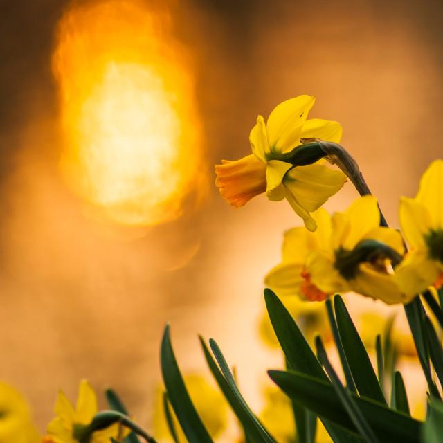 """Hyacinth on the riverside"" stock image"