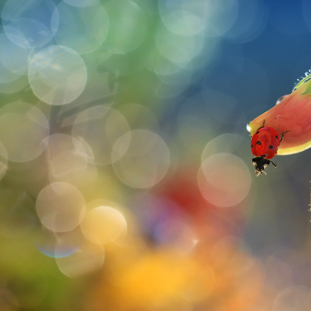 """""""Small red ladybird"""" stock image"""