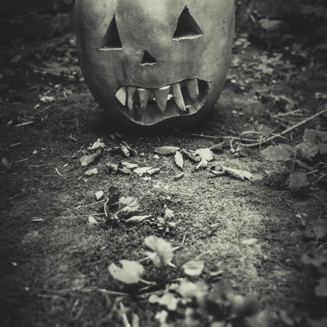 """Halloween"" stock image"