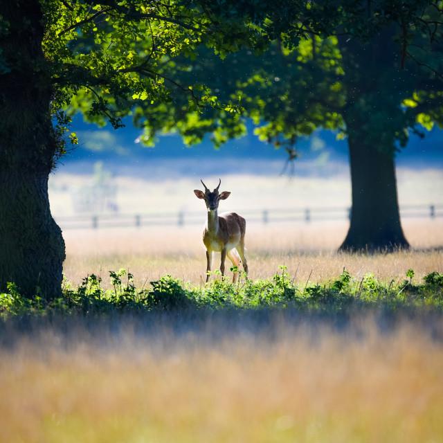 """Deer Stalking"" stock image"