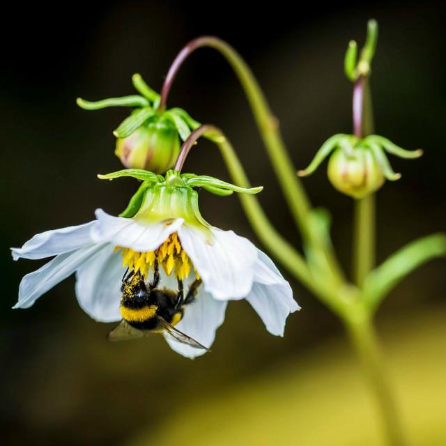 """Bee on flower"" stock image"