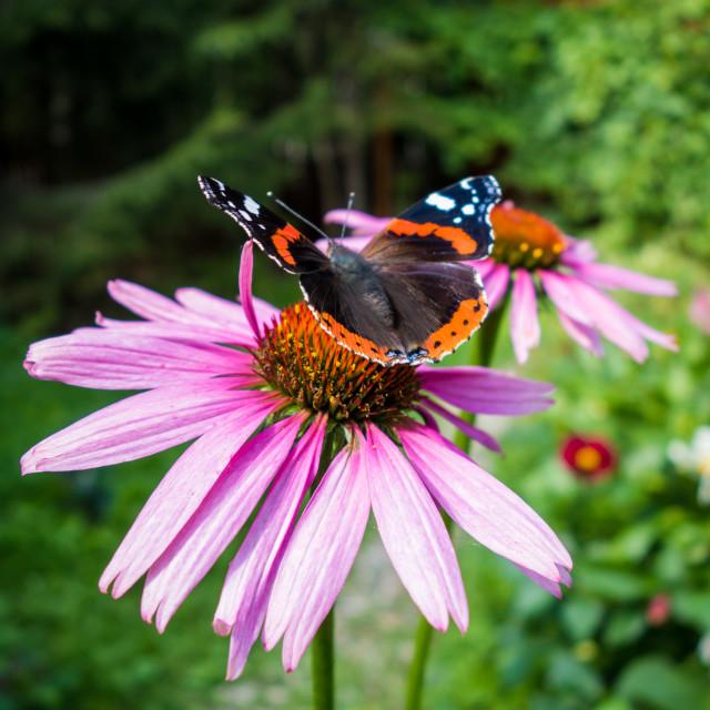 """Beautiful butterfly"" stock image"