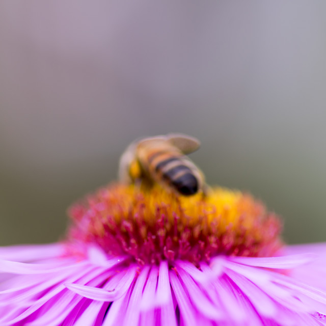 """Bee impression #1"" stock image"