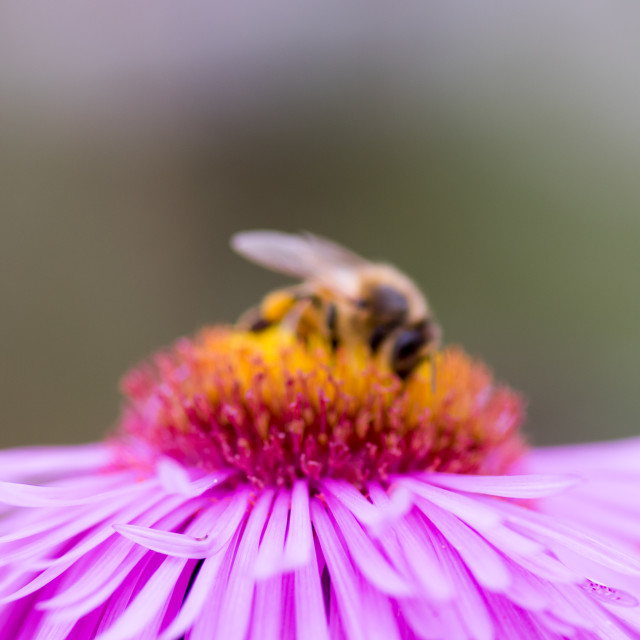 """Bee impression #2"" stock image"