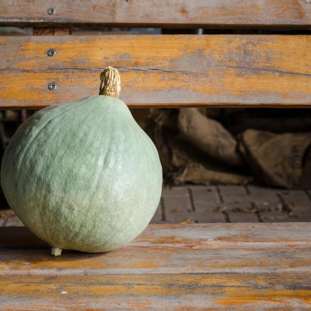 """light coloured pumpkin"" stock image"