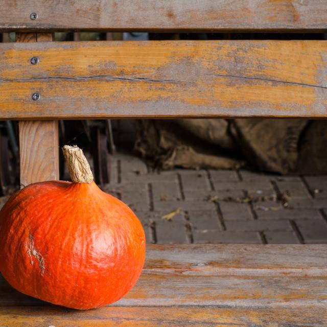 """orange pumpkin"" stock image"