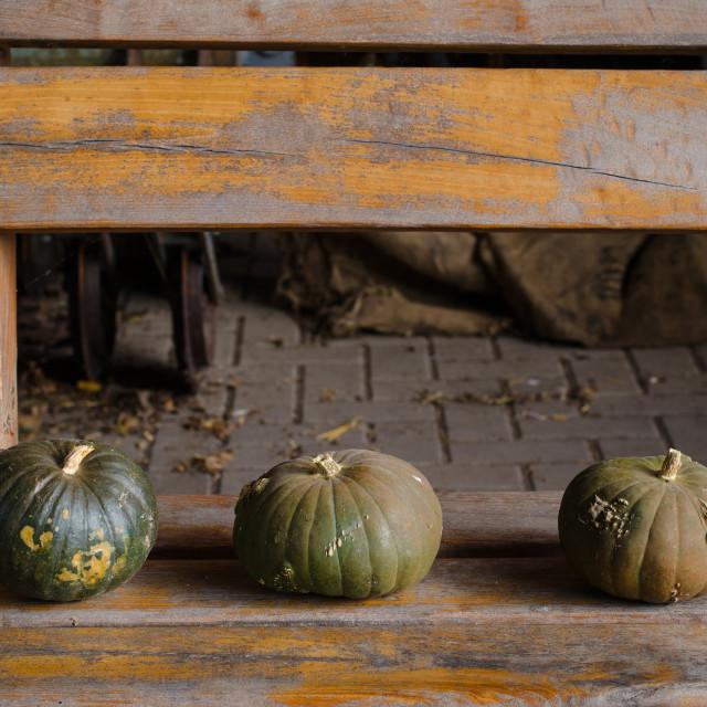 """three green pumpkins"" stock image"